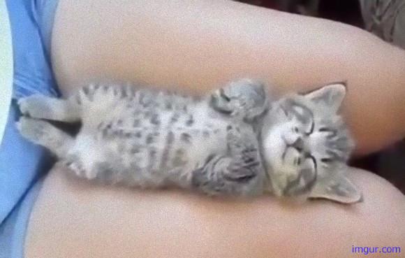 とても甘い夢を見ているようだ。女性の太ももの間で眠る子猫