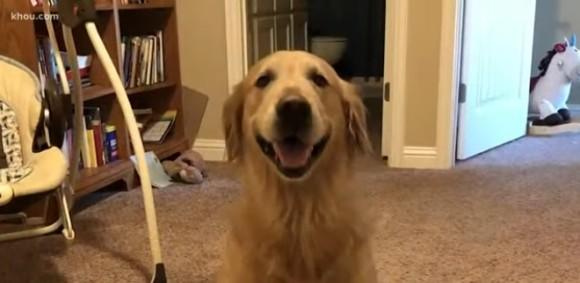 愛犬を連れて車で旅行していた一家が食事中に犬を盗まれる。地元メディアの協力を経て犬を所在が明らかに(アメリカ)