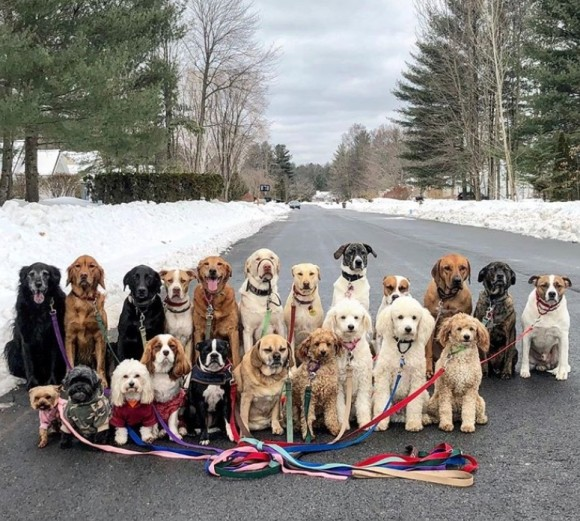 総勢20匹以上!近所の犬をまとめて散歩させるサービスがニューヨークで実施中。それにはこんなメリットが!