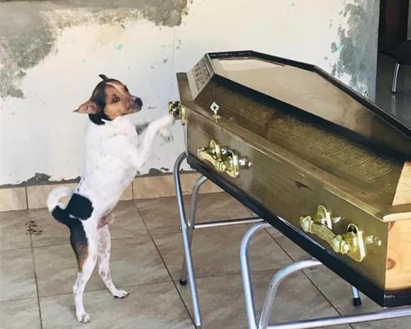 亡くなった飼い主の棺から離れようとしない犬