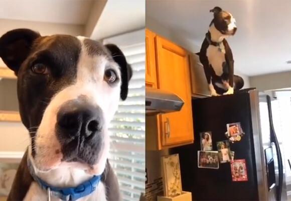 犬の猫化。猫2匹のいる家にやってきた保護犬の場合、すっかり自分を猫と思い込む