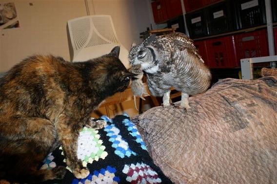 caring_owl_03