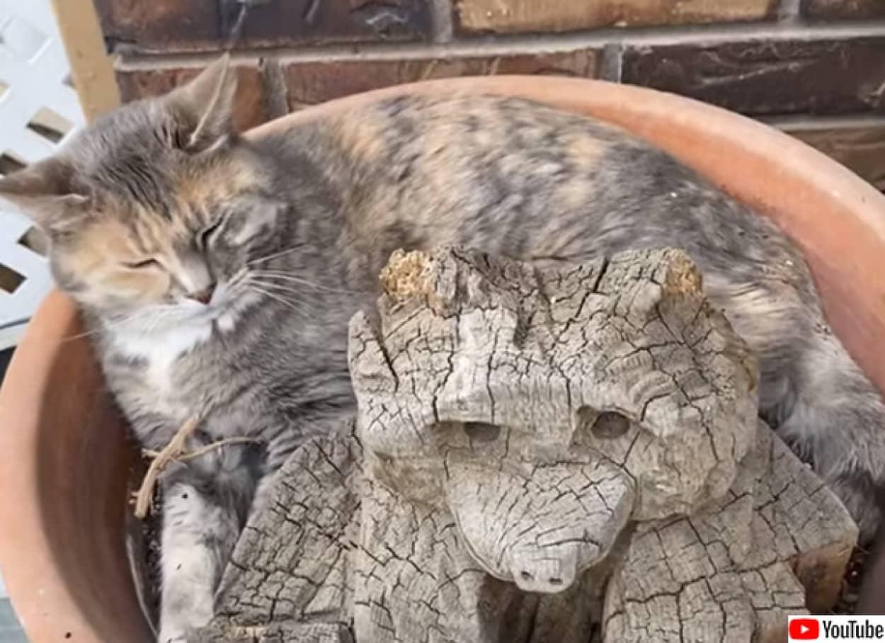 猫が生える植木鉢