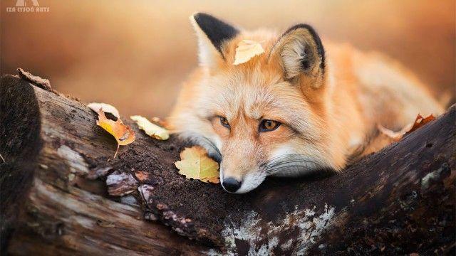 fox-29_e