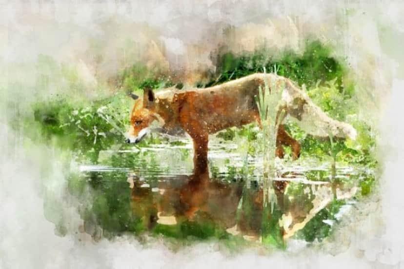 fox-3184118_640_e