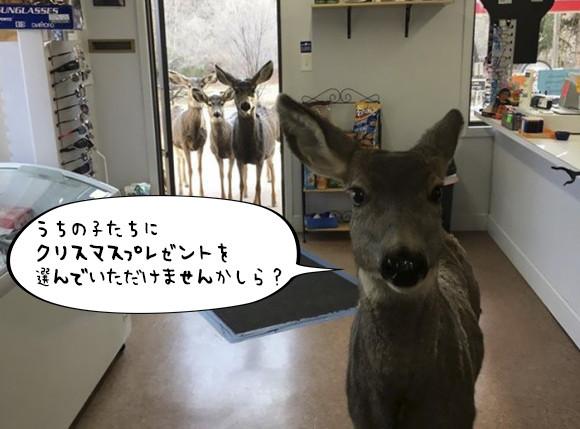 プレゼントを買いに来た?ギフトショップに入ってきたのは鹿だった。下見した後、家族を連れてやってきた!(アメリカ)