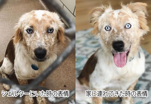 25歳の誕生日に犬を飼おうと決意していた女性。家に連れてきたところ犬の表情がみるみる輝いて...