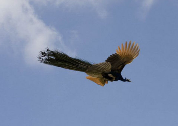飛ばない鳥 オーストラリアや ...