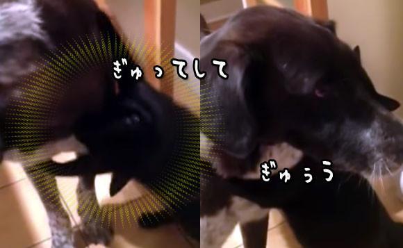 10日ぶりに犬と再会した猫の「会いたかったよぅ!」が完全抱擁レベルだった