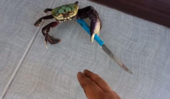 crab4_e