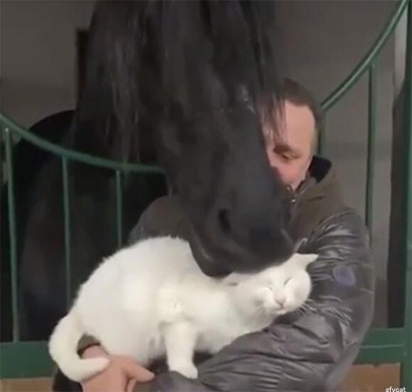 """猫好きの馬、猫を口で""""はむはむ""""するよ"""