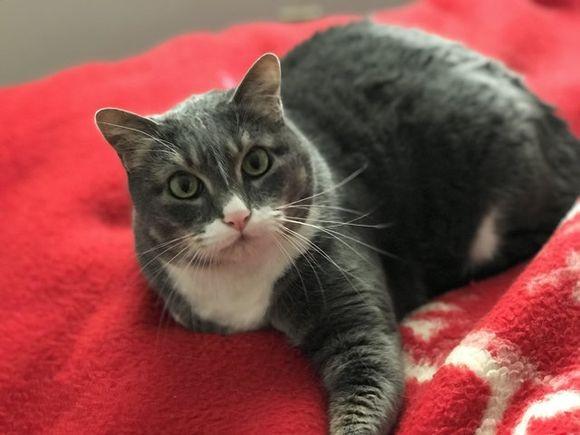 飼い主が危ない!心臓発作を起こした飼い主の命を救った猫