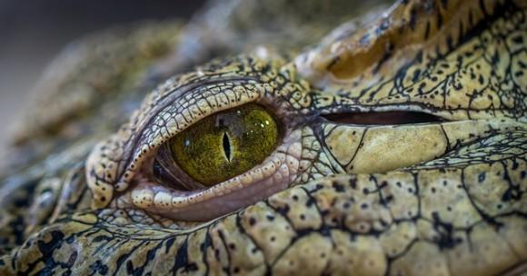crocodile-3203505_640_e