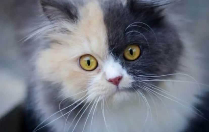 cat1_e