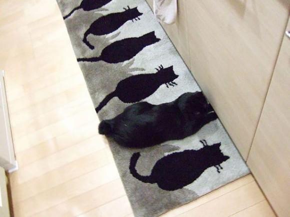 日々進化する猫たちの擬態レベルにはびっくりだよもう。