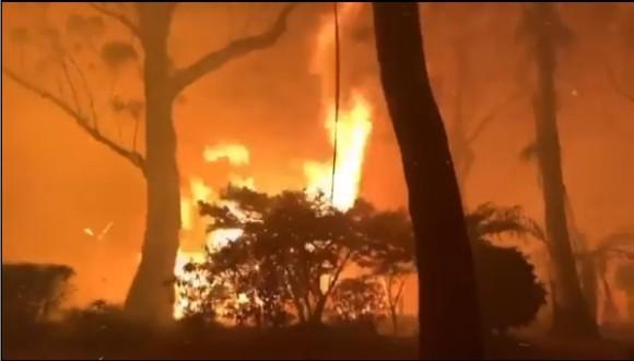 メタリカやエルトン・ジョンなど多くのセレブたちがオーストラリアの森林火災に多額の支援