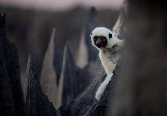 Madagascar_10