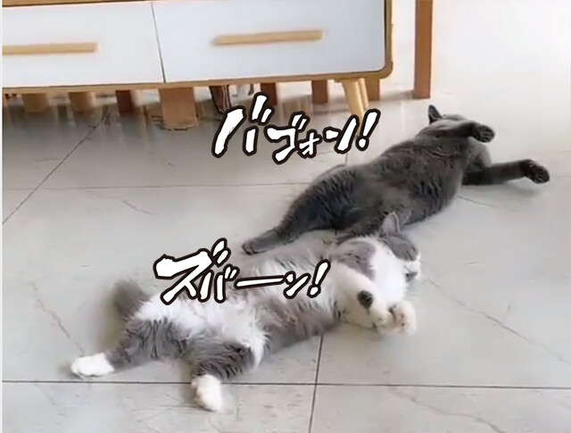 猫が!猫が!犬が!指鉄砲で次々と倒れていく死亡遊戯の連鎖
