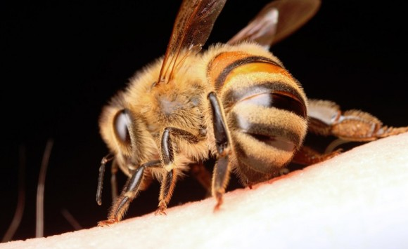 ハチに刺されると一番痛いのはどこ?学生が体を張って自ら検証した「全25部位痛みランク表」
