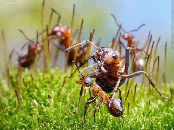 ants_09