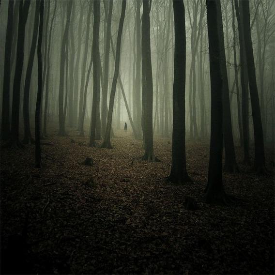 fog_01
