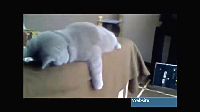 sleepingcat10