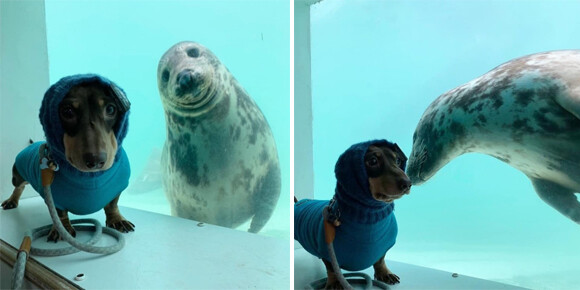 犬と海の犬(アザラシ)が仲間になった!ガラス越しから友情がしっかり届いているよ(イギリス)