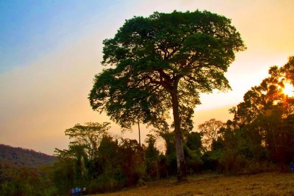 tree1_e