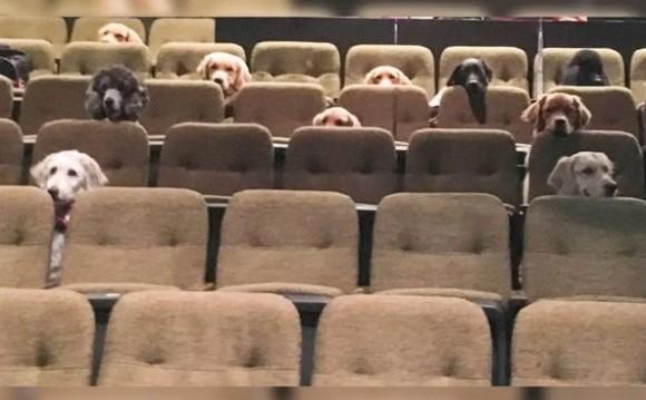 たくさんの犬たちが劇場の座席にきちんと座ってミュージカル鑑賞!お行儀の良いその姿に世界が感動(カナダ)