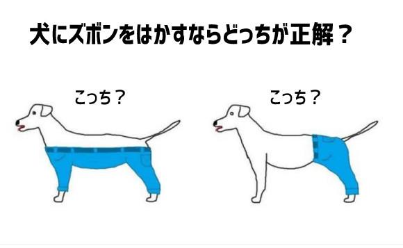 これは悩むわ。犬にズボンをはかすならどっちが正解?