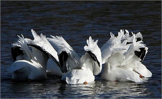 synchronized swimming animals 17