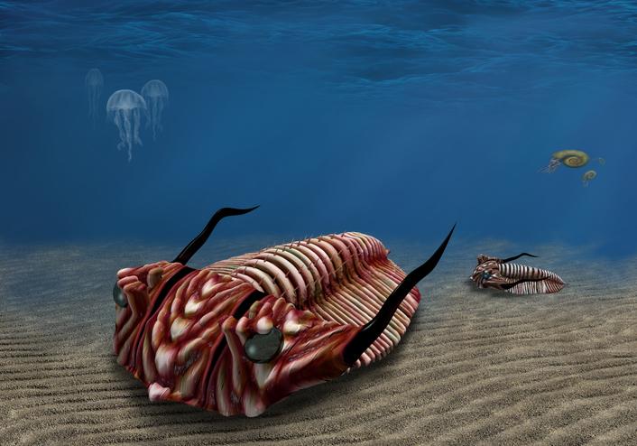 三葉虫に新たなる発見!複眼の中に複眼がある、3億9000万年前の個体が発見される