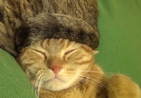 猫毛100%のお帽子を被って眠る猫