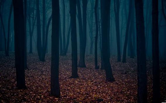 fog_02