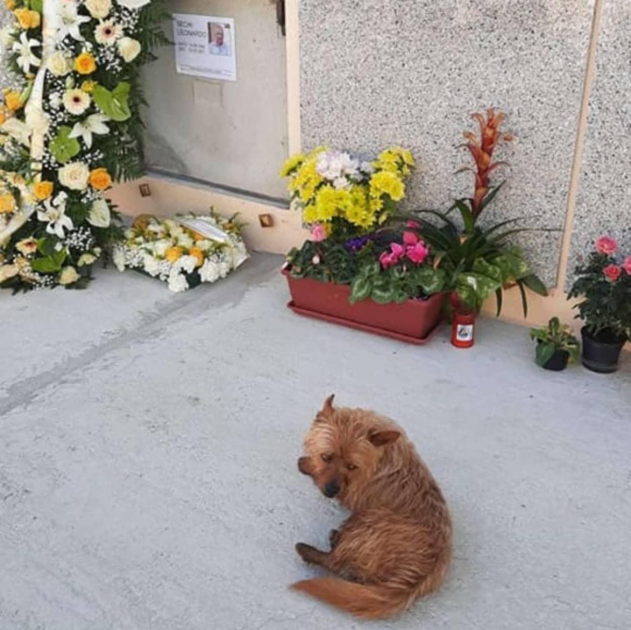 飼い主のお墓の場所を探し出し、毎日お墓参りする犬