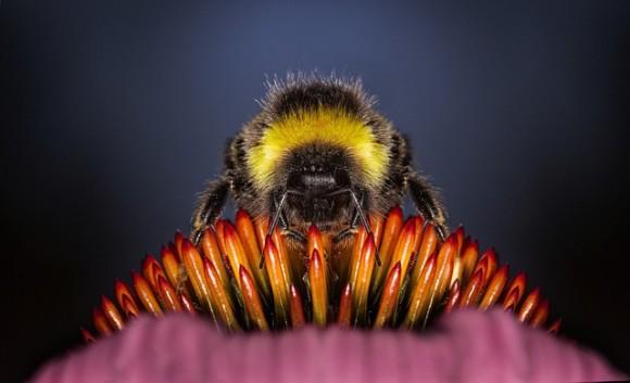 おバカもいればおりこうもいる。ミツバチの脳の神経細胞と賢さの研究(英研究)