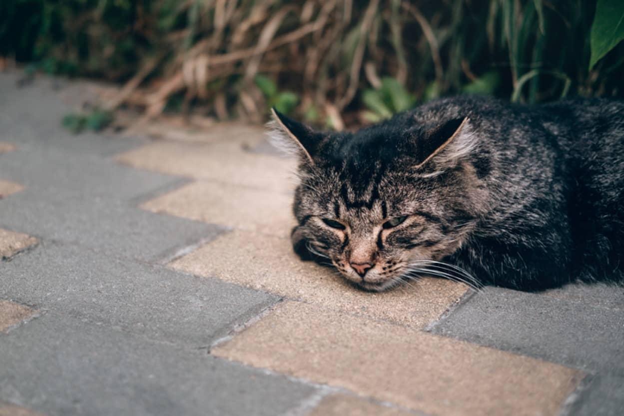 隣人の猫が飼育放棄され、面倒を見ていた女性の相談