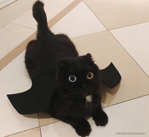黒猫なのにオッドアイ。インスタで人気のキャットアイドル、その名もニウ・ナァイ(牛乳)