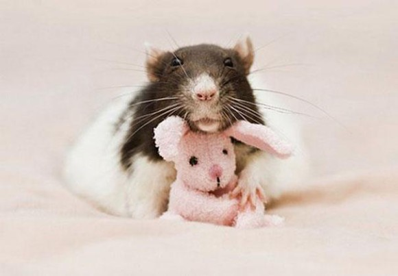 rats-with-teddy-bears-jessica-florence-4_e