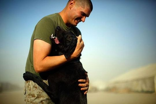 dogs_in_army_12