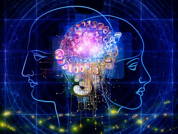 男脳と女脳に関する研究