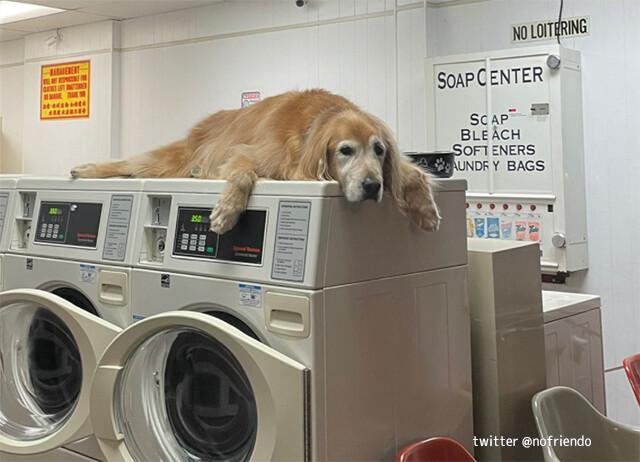 こんなコインランドリーならずっと待てる!犬が洗濯機の上でグデっと店番