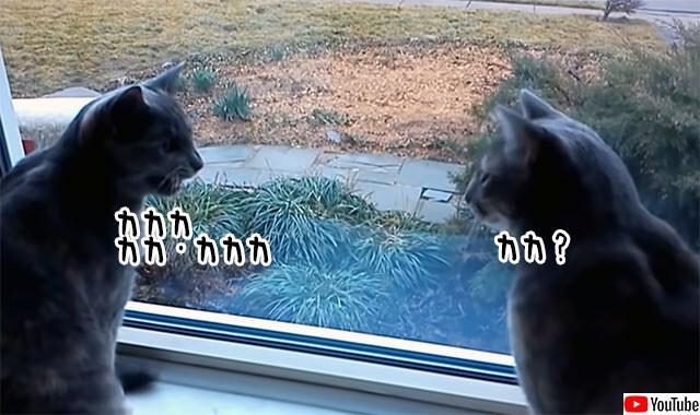 カカカで会話する2匹の猫