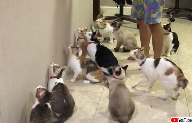 猫じゃらしと大量の猫