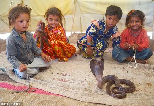 世界 蛇使い学校 インド