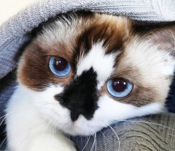 クールだろ?鼻にドクロのような模様を持つ、スカルノーズの猫「アルバート」さん