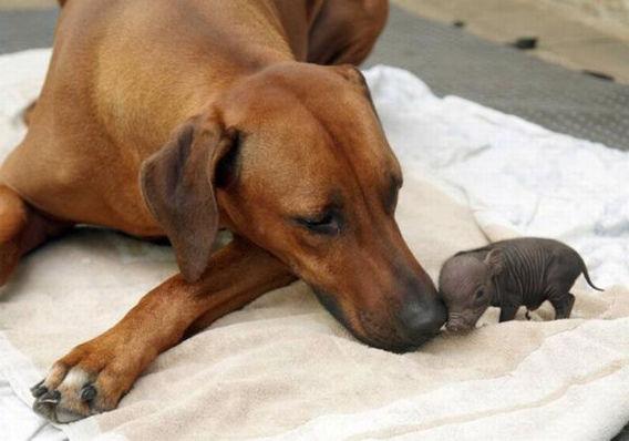 animal_adoptions_03