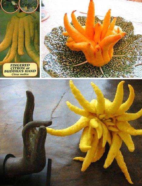 amazing_fruits_3