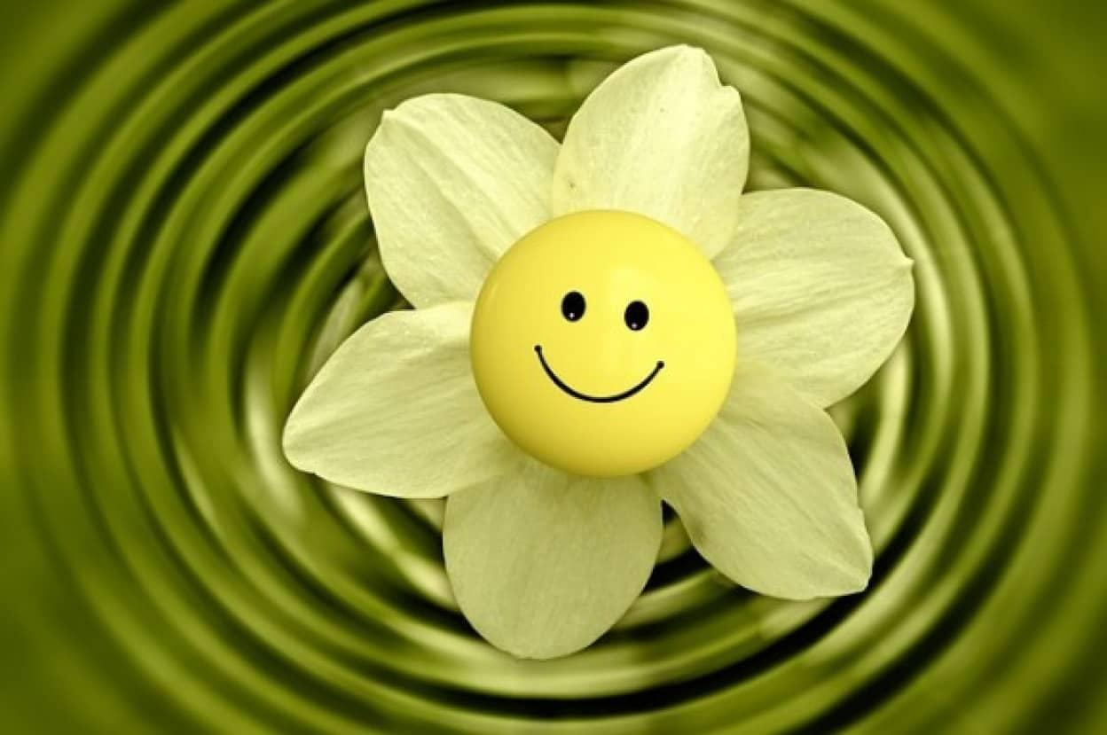 blossom-233838_640_e