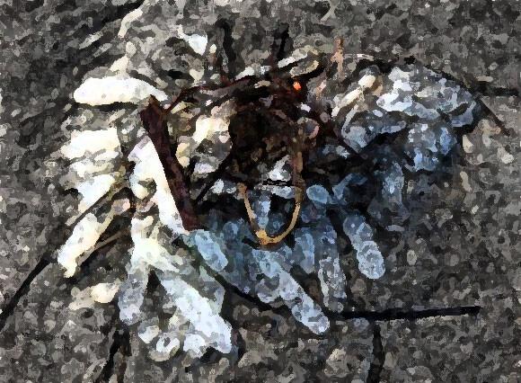 エイリアンの卵なのか?海岸に打ち上げられた白い粒状のものが入ったソーセージ状の袋(つぶつぶ注意)